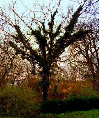 Baum warm eingepackt