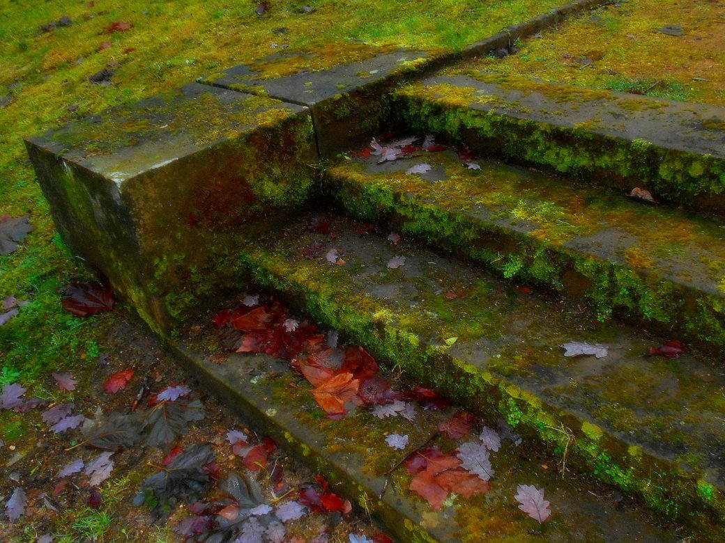 Treppenstufen mit Moos bewachsen