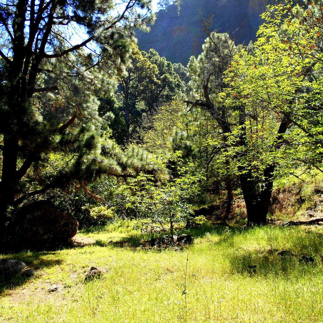 La Palma Wald