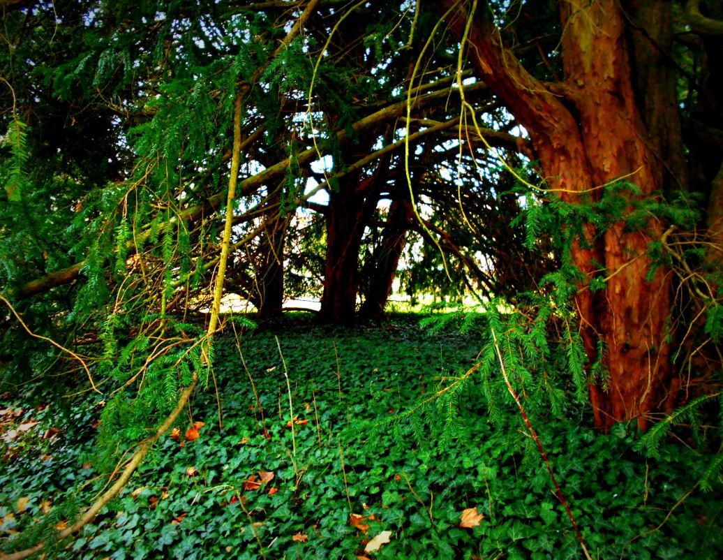 unter dem Baum