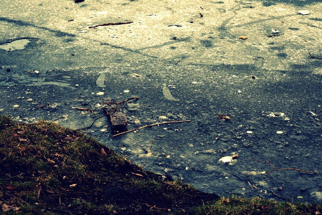 Treibholz im Eis