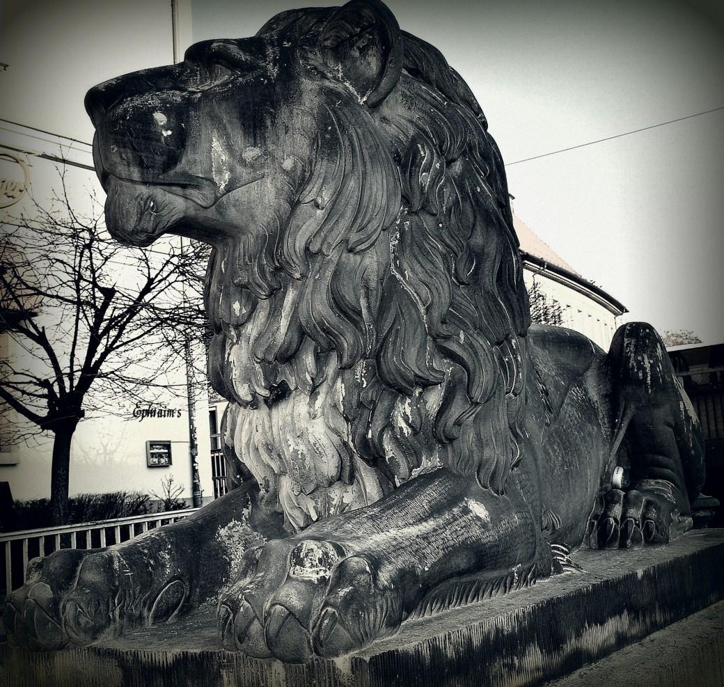 Ruhender Löwe sw
