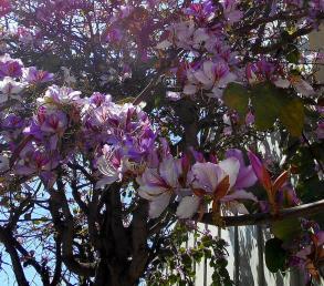 Blütenrausch - Kopie
