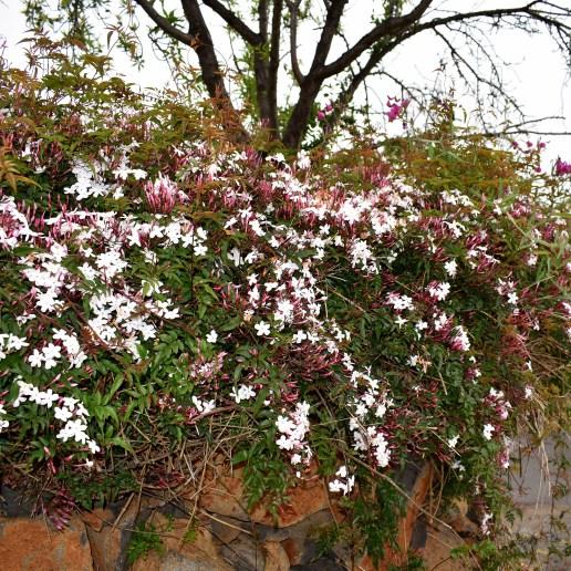 Blütenteppich rosaweiss