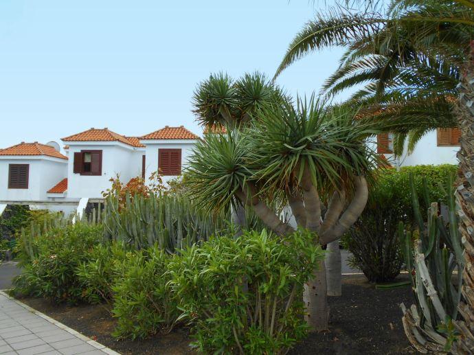 Los Cancajos Häuser mit Palmen - Kopie