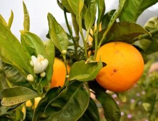 Orange und Blüten