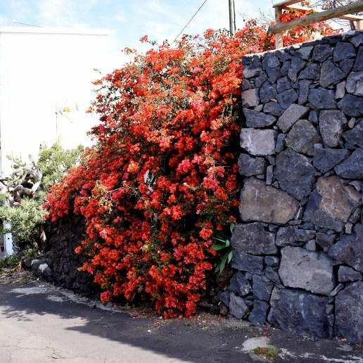 Roter Mauerschmuck