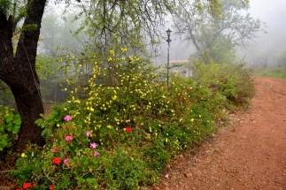 Weg zum Haus im Nebel