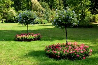 Blütenbäume
