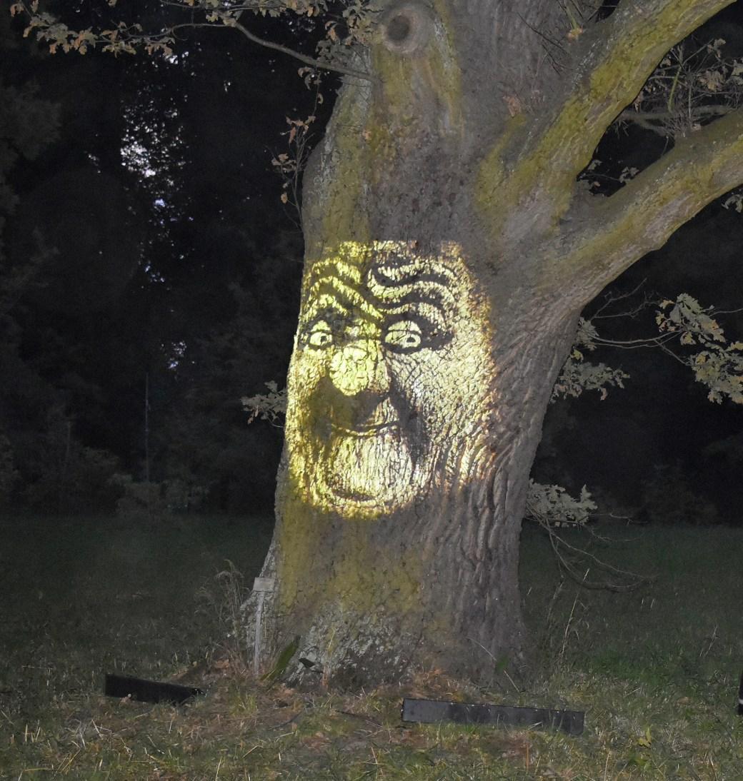 Mein Freund - Der Baum - Botanischer Garten Kunst trifft Natur