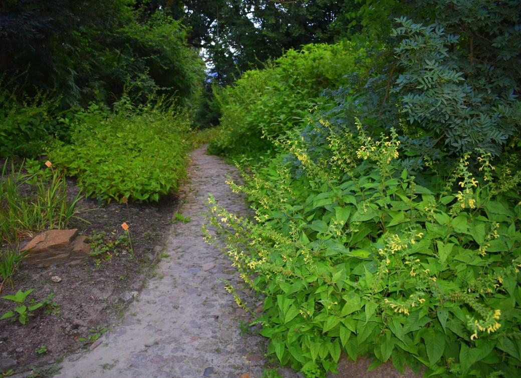 Weg im Botanischen Garten