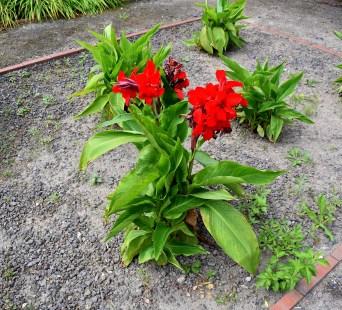 Pflanze in Rot - Kopie