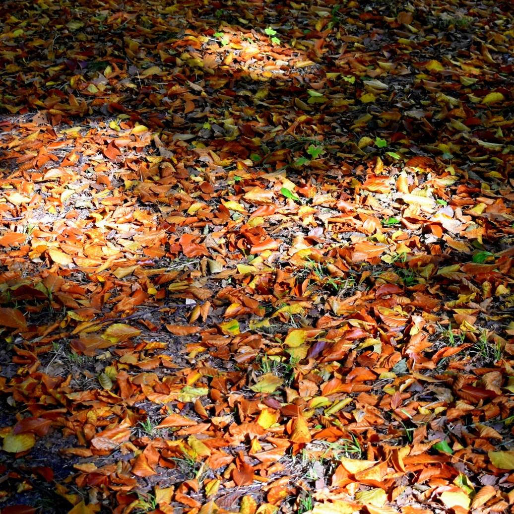Blätterboden