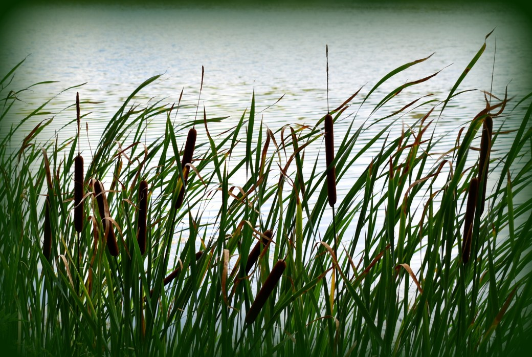 Gräser grün