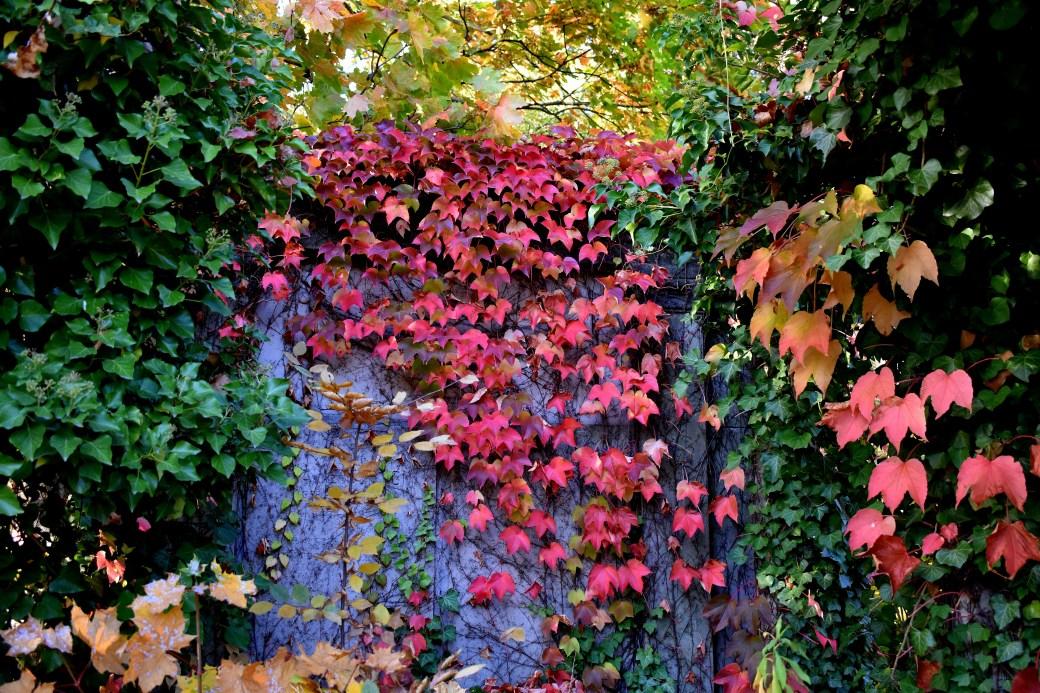 Herbstrot - Kopie - Kopie