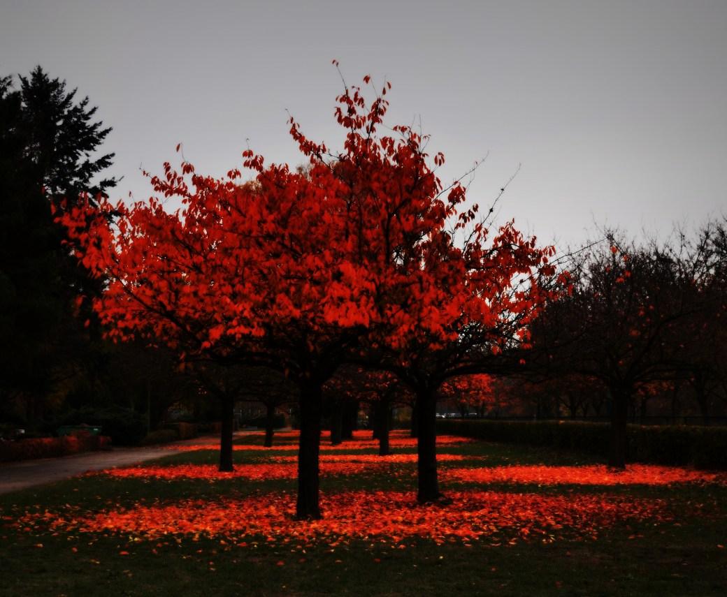 Im Novemberlicht