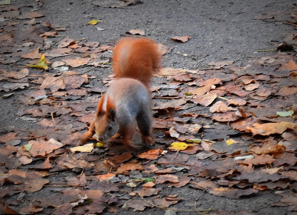 Eichhörnchen zu Besuch