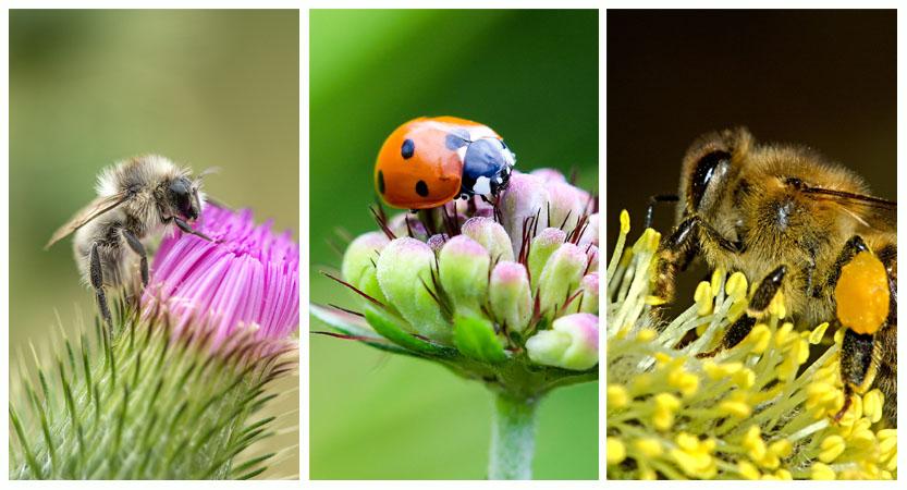 TOP 26 Aufrechterhaltung der Insektenvielfalt