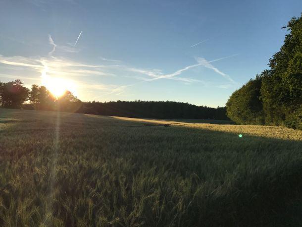 Die Sonne steht tief im Revier von Felix Kohl