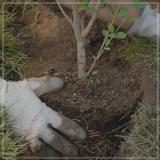 Neupflanzungen