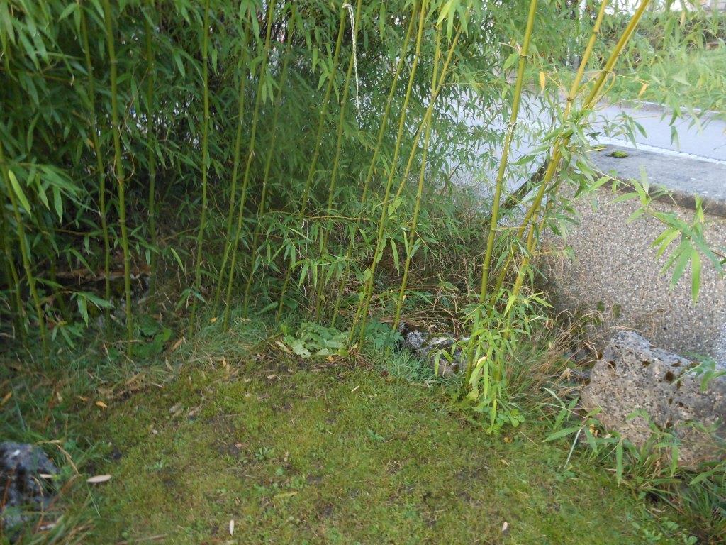 bambus im garten, bambus rhizome vernichten – home sweet home, Design ideen
