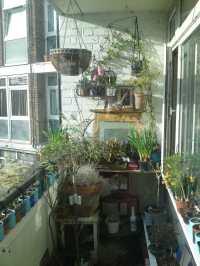 balcony gardening | Grumblemouse Musings