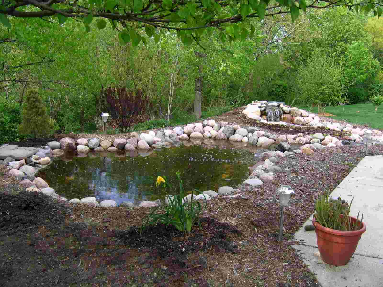 NewPond after first plantings