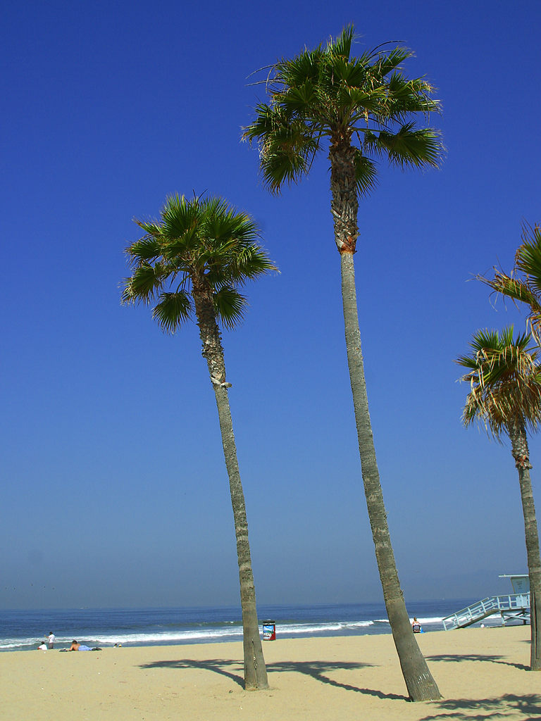 Friday Distraction Venice Beach Palm Trees  Grumpy Coworker