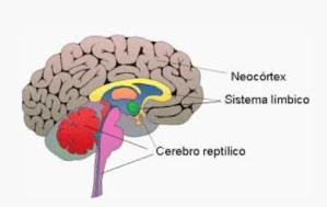 3 nuevos secretos del neuromarketing