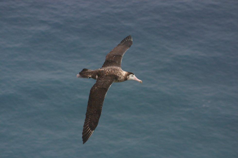 Description Albatros d'amsterdam Date 2005 Source Own work Author Vincent Legendre