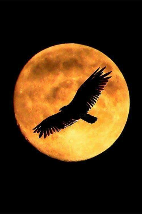 La silueta de un águila recortada sobre una luna llena de tonos amarillos
