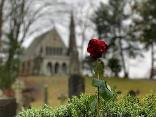 Foto de una rosa roja solitaria con una imagen difuminada de una iglesia al fondo.
