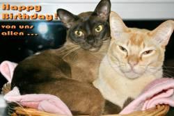 Grußkarte zum Geburtstag selbst basteln Katzen