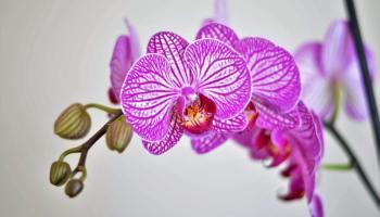 Orchidee verzorging