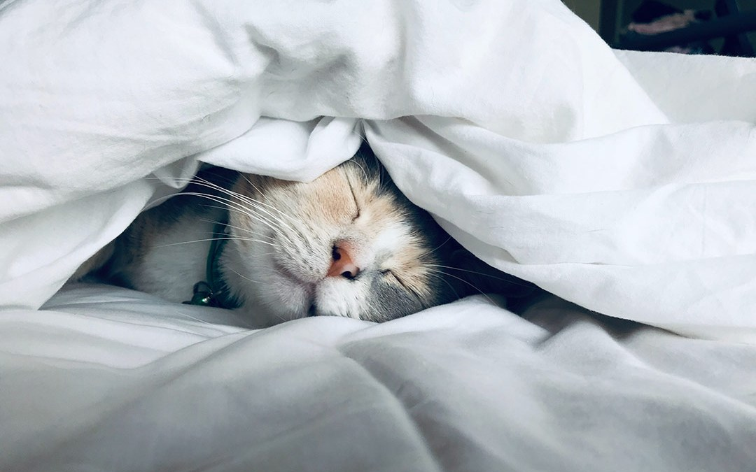 got some sleep