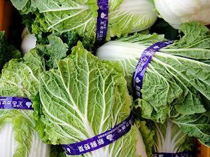 白菜ダイエット