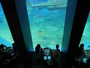 美ら海水族館カフェ