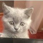 Создан переводчик с кошачьего языка