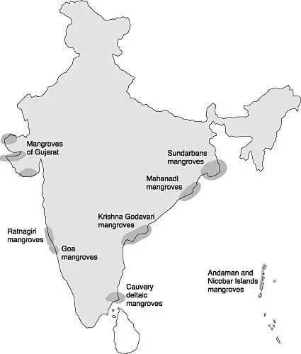 Mangroves in India   scorebetter.in