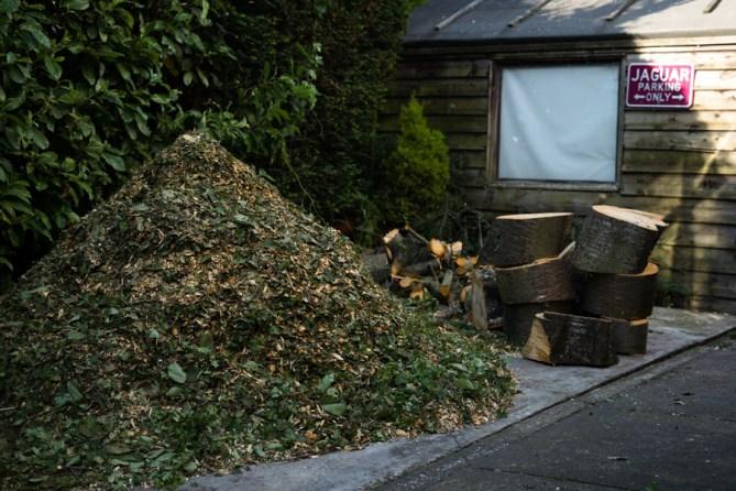 Cherry Tree Removal, Derbyshire 05