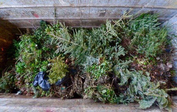 Christmas Tree Recycling Arrangements For 2017