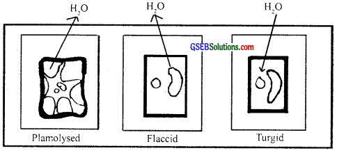 GSEB Solutions Class 11 Biology Chapter 11 Transport in Plants img 1