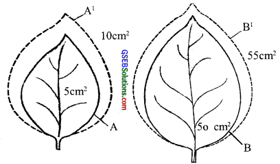 GSEB Solutions Class 11 Biology Chapter 15 Plant Growth and Development img 3
