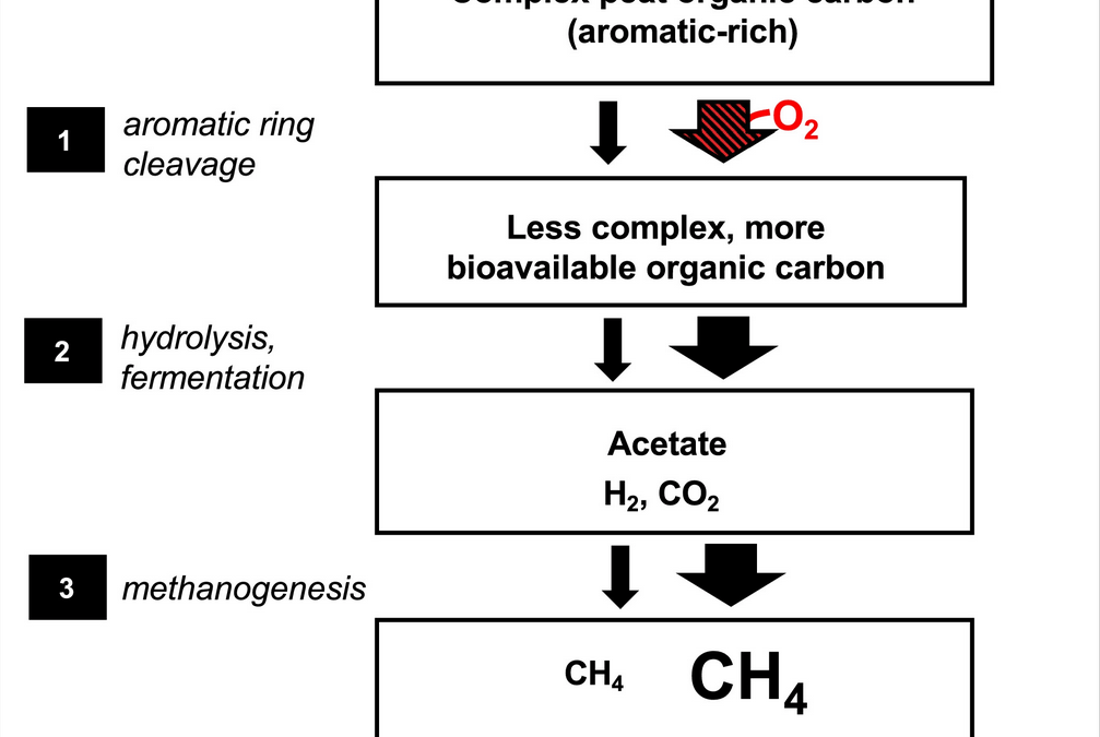 The role of oxygen in stimulating methane production in wetlands