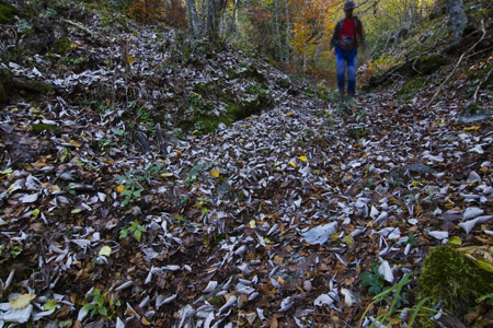 Alfombra de hojas de mostajo
