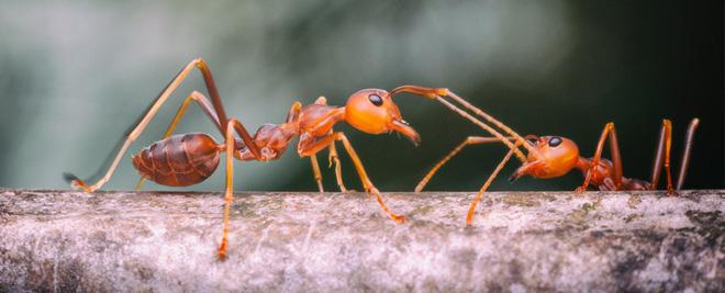 Sau này có muốn lười biếng thì hãy lười có kế hoạch như loài kiến - Ảnh 1.