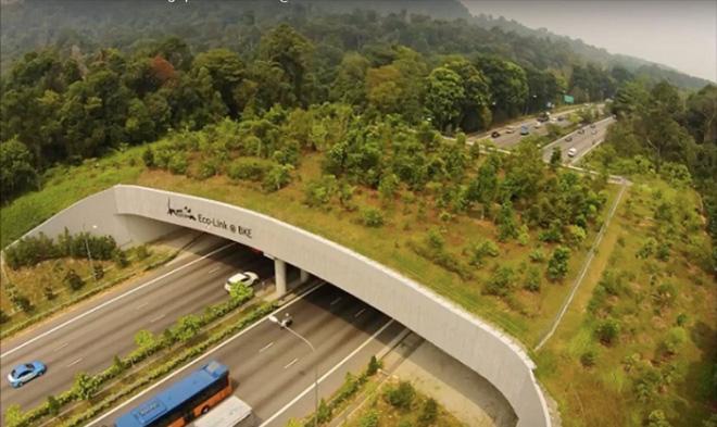 Top 8 cây cầu ấn tượng nhất Châu Á, số 8 chính là ở Đà Nẵng - Ảnh 9.