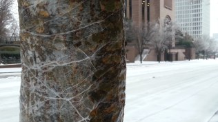 A layer of ice coats a tree near the Bank of America building.