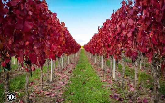 Herbst Impressionen - Weingut Braun Volkach