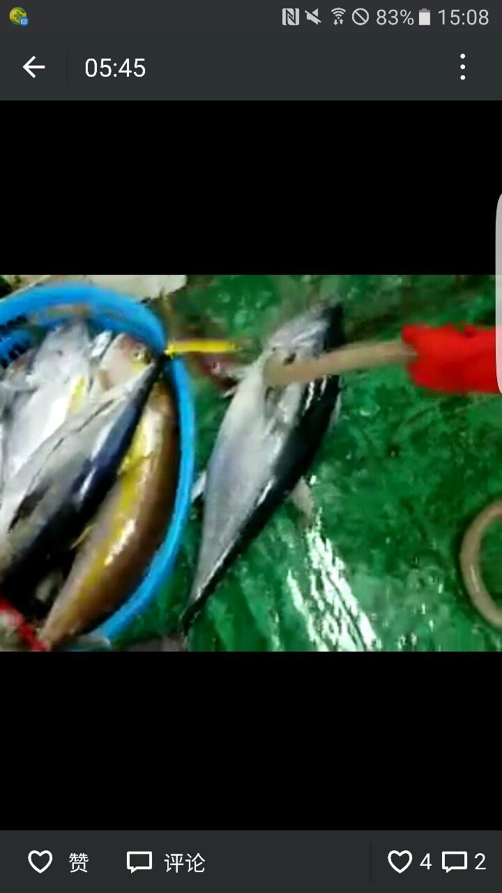 20多斤藍鰭金槍魚,值多少錢?昨晚釣上得。_百度知道